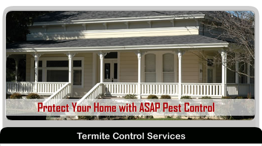 Gwinnett County Pest Control Services | Residential and
